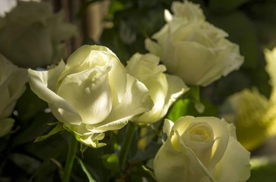 Roses blanches chez Rithner Fleurs