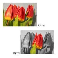 La retouche d'image désigne tout procédé qui consiste à modifier une image.